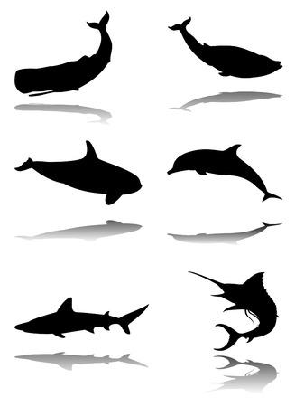 Zes silhouetten met reflex van mariene dieren: pot vis, blauwe vin vis, orca, dolfijnen, haaien, marlin
