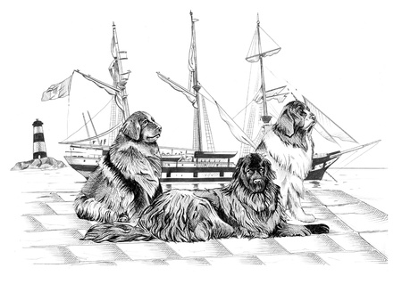 Hand-made black and white illustration  three Newfoundland dogs on the pier  An ancient ship and a lighthouse behind them illustration
