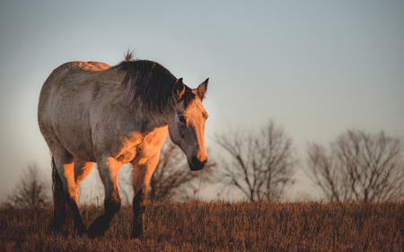 horse out in the field. sunrise on the farm Imagens
