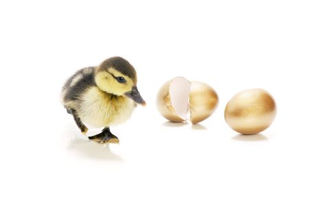 heir: Heir to the goose that lay the golden eggs story. Stock Photo