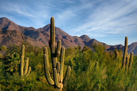 Sonoran Desert in Scottsdale Arizona with views of the McDowell Mountains including Thompson Peak.