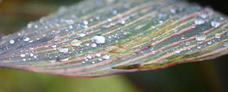dewdrops: dewdrops on a leaf Stock Photo
