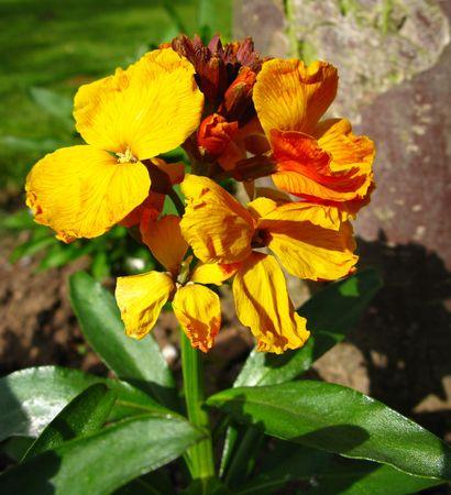 wallflower: wallflower