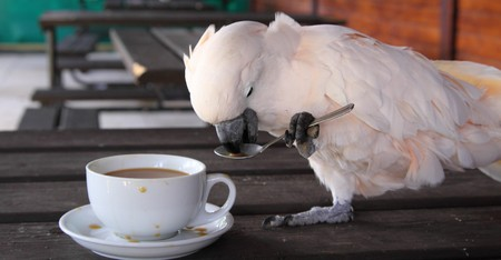 Cockatoo Stock Photo - 7592949