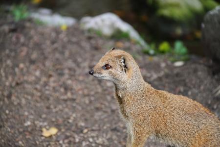 mongoose: Mongoose