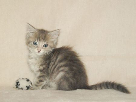 Cute kitten playing with a ball Stock Photo