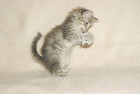 Cute kitten attacking little ball