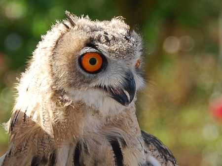 Big orange owl eyes Stock Photo