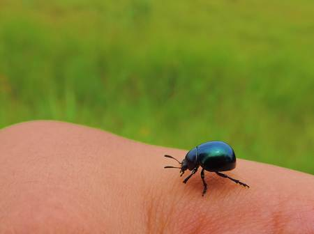 Insect on hand