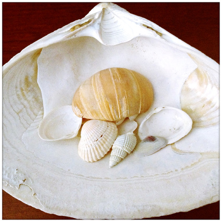 style image of a seashell collection on wood background Imagens
