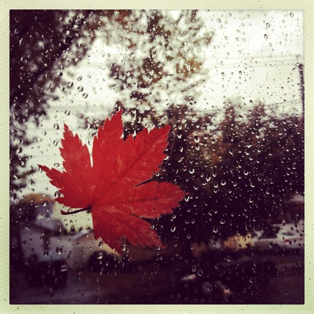 style image of a leaf against a window during a rain storm Imagens