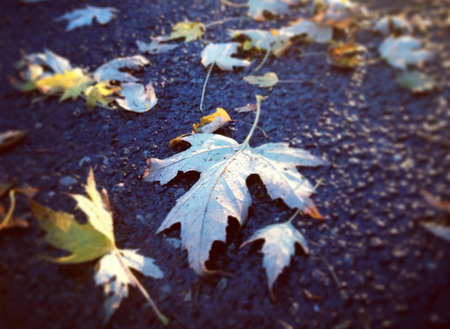 style image of fall leaves on the wet ground the day after Halloween