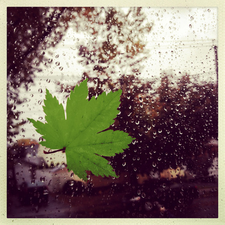 style image of a leaf against a window during a rain storm Banque d'images