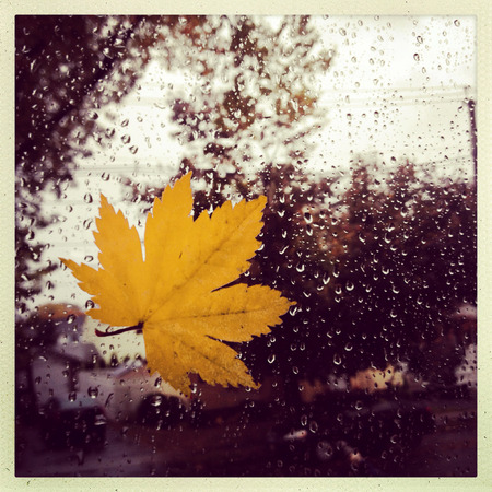 style image of a leaf against a widow during a rain storm Banque d'images