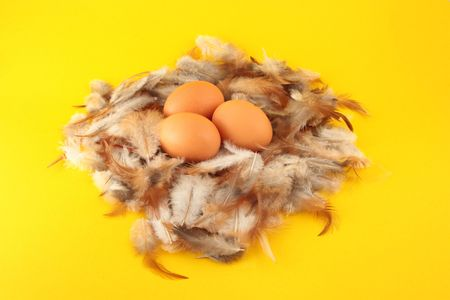 Chickens eggs in nest on feather background