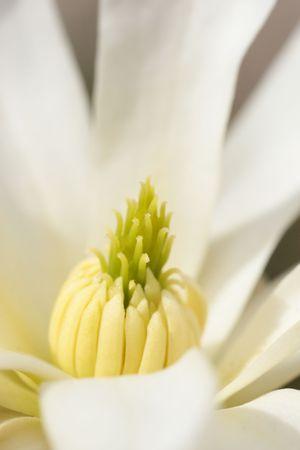 Amazing Close-up of White flower petal