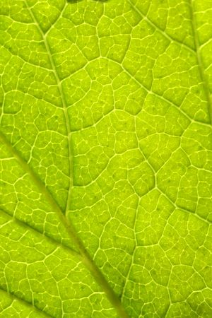 Amazing close up of green leaf