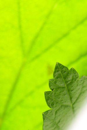 Amazing close up of green leaf