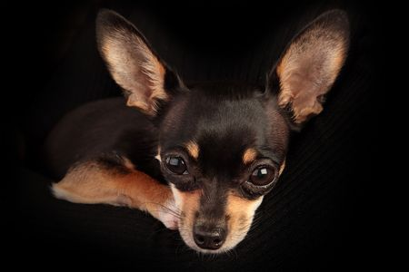 Small dog with expressive glance look into camera. Concept: Every dog needs a home.(Studio Shot) Stock Photo