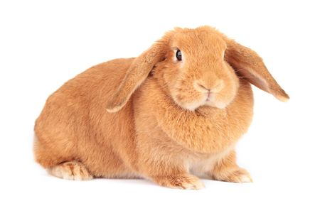Young bunny isolated on white background Stock Photo
