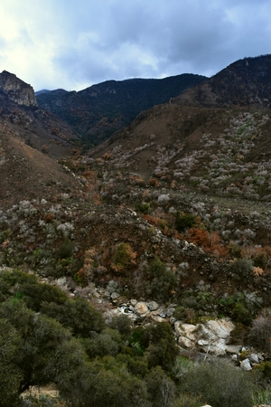 Kings Canyon, California - February 12 2018: A colorful scene of burned and lush interspersed foliage in the southwest foothills of the Sierra Nevadas 報道画像