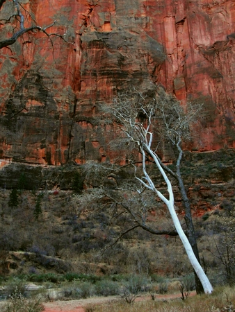 Springdale, Utah - December 06 2017: Zion Canyon National Park
