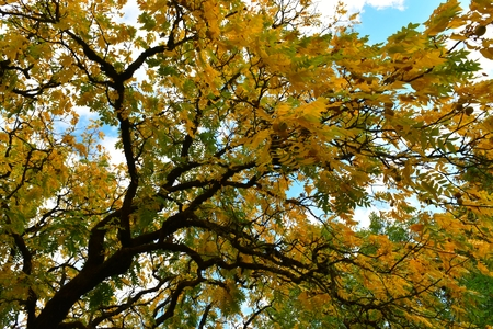 Eugene, Oregon - 2018_10.06: Colorful ash tree autumn foliage along the Willamette River 免版税图像