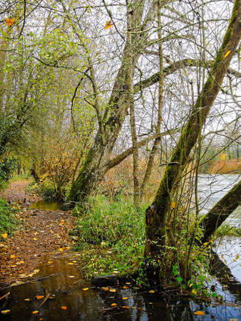 Ducks and autumn foliage along the Willamette River outside Eugene, Oregon