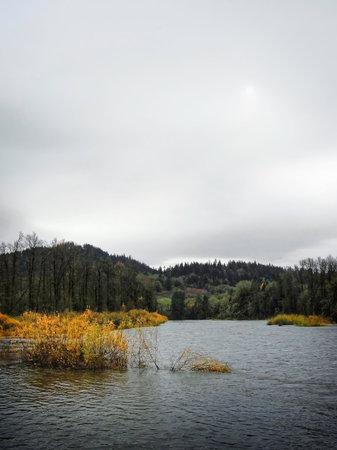 Autumn foliage along the Willamette River outside Eugene, Oregon