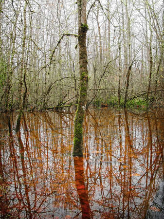 Autumn reflections in a pond alongside the Willamette River outside Eugene, Oregon Stock Photo