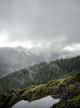Foggy spring afternoon along the trail to Skull Rock, Willamette National Forest, Oregon
