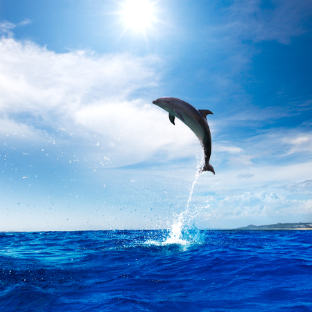 Dolphin Jumping From Open Water in Sea Under Blue Cloudy Sky With Bright Sun Stock Photo