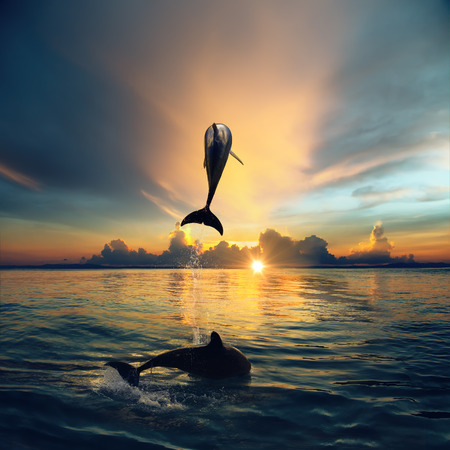 bottlenose: Two Dolphins Leaping From Sunset Ocean. Vibrand Tropical image with marine animals