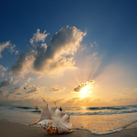 shorebreak: Tropical ocean paradise design postcard. Sandy beach with seashell at the shorebreak line