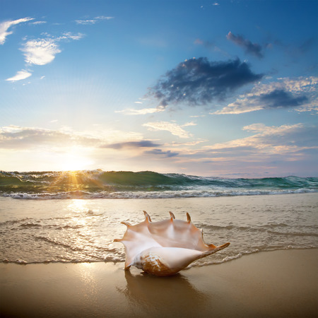 shorebreak: Tropical ocean paradise design postcard. A beach with seashell of giant mollusk on reflected wet sand near shorebreak waves Stock Photo