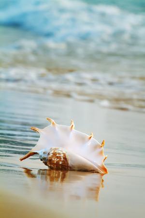 shorebreak: Tropical ocean paradise design element. A beach with seashell of giant mollusk on wet sand near shorebreak water