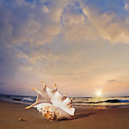 shorebreak: Tropical paradise postcard. A beach with seashell on wet sand near shorebreak waves