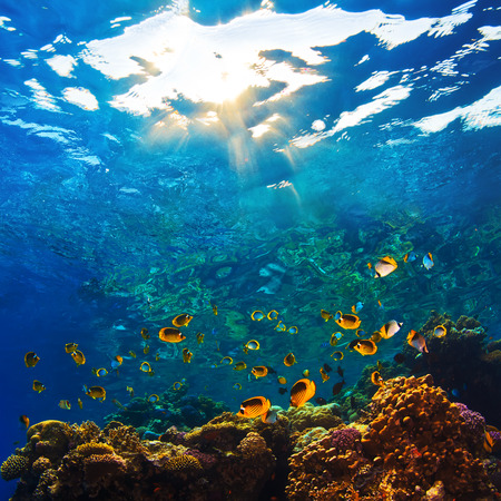 abstract shallow coral garden with glossy water surface and colorful yellow fish playing in sunshine Stock Photo