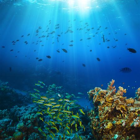 Ocean underwater coral reef in open deep sea Stockfoto
