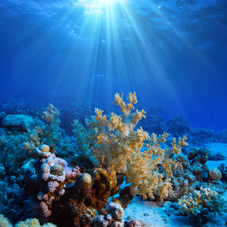 Ocean underwater coral reef in open deep sea Standard-Bild