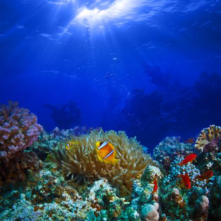 Ocean full of life. underwater coral reef in open deep sea