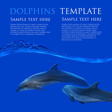 waterline: family of dolphins underwater on flat blue background with waterline template