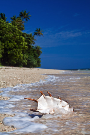 oceanscape: A Tropical Pacific ocean beach with seashell and foam