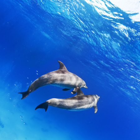 A pair of dolphins underwater in open water Stock Photo