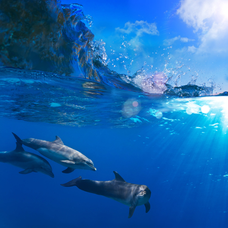breaking wave: A small flock of dolphins playing in sunrays underwater underneath of breaking wave