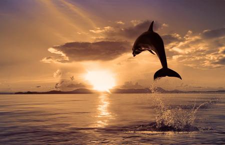 아름다운 돌고래가 일몰 시간에 뛰어 올랐다.