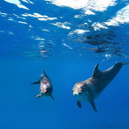 두 재미있는 좋은 돌고래와 수 중 깊고 푸른 물 표면