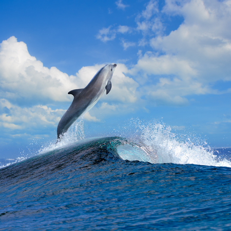 beautiful cloudy seascape in daylight and dolphin jumping out from blue curly breaking surfing wave Stock Photo