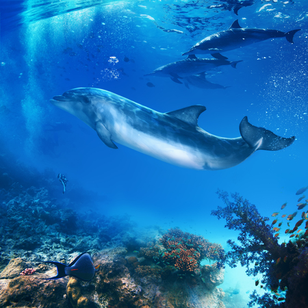 funny flipper posing underwater in front of dolphins family Banque d'images