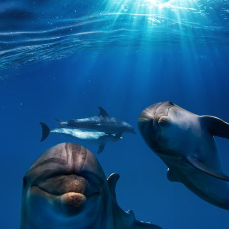 Los rayos del sol y profunda superficie del agua azul con dos bonitos divertidos delfines bajo el agua Foto de archivo - 60889785